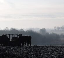 cows feeding in the mist by angimoo