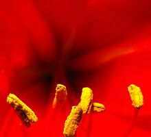 Red Amaryllis by Tracy Faught
