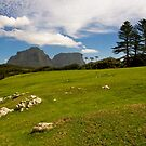 Lord Howe Island, Tasman Sea by Bill  Russo