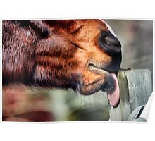 Fence Post Takes a Licking Poster