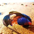 mussel shell on llangennith beach  by lisaellen