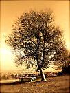 Midas' Autumn  by Kenny Gulley Jr.