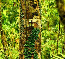 Daintree Forest - Mossman Gorge - Trek 13 by Geoffrey Thomas