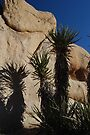 Yucca and Rocks by Tori Snow
