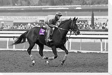Breeders&#x27; Cup Classic World Champion Zenyatta by caqphotography