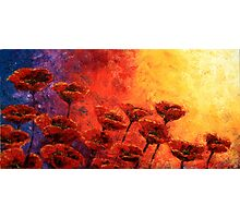 Heavenly Poppies Photographic Print