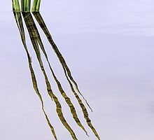 reeds by nadine henley