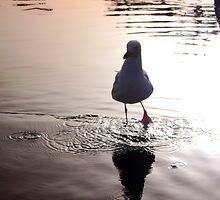 Seagull by Sarah Jennings