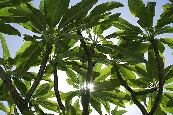 Tropical Canopy by PhotosByLeila