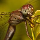 Dragonfly by Andrew Durick