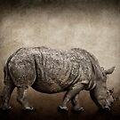 Rhino by Kurt  Tutschek
