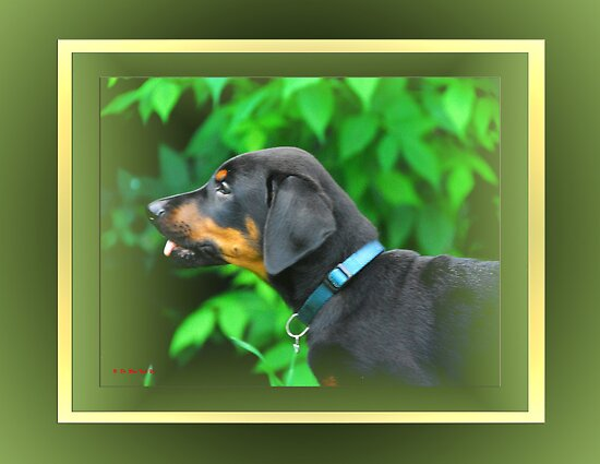 Dazed Puppy Dexter by TerriRiver