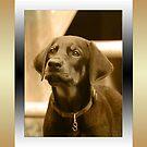 """Dexter - """"my passport photo"""" by TerriRiver"""