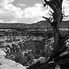 Canyonlands of the Southwest by Amanda Yetman