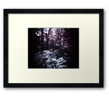 Lost in the Woods Framed Print