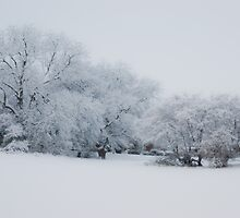 Let it Snow . . .  by Mark Thompson