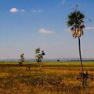 Pandanus plain, Kakadu, Australia by Bill  Russo
