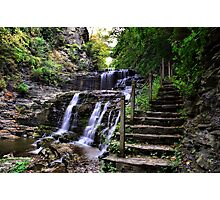 Beauty by the Path Photographic Print