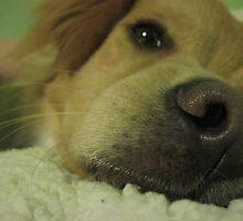 Cthulhu, my little puppy man. by analisie