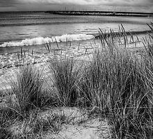 The grassy knoll at Apollo Bay in monochrome by Elana Bailey