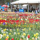 Floriade - Canberra 2009 by CClarke