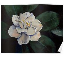Gardenia Oil Painting Poster