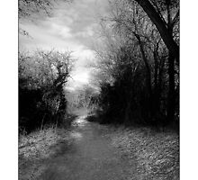 Purwell Woods - Hitchin, Hertfordshire by MoGeoPhoto