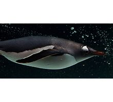 Swimming Penguin Photographic Print