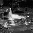 Weeping Rock at Somersby by Tatiana R