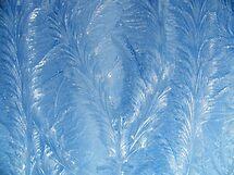 frost pattern by Joyce Knorz