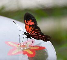 Butterfly - Botanical Garden Munich by Melanie PATRICK