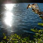 Spider Web in the Sun-Lake Minnewaska by BeccaAlysse