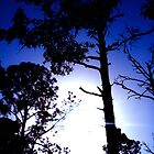 Blue Tree Silhouettes by BeccaAlysse