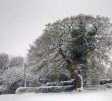 Winter Oak by missmoneypenny