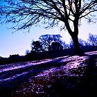 """The Fairy View"" by lloyduss"
