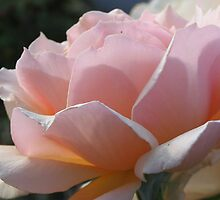 Simple and Delicate Pink Petals by art2plunder
