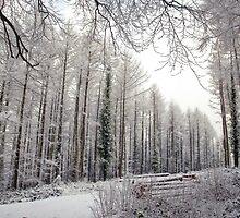 Winter in Buckholt Wood 1 by missmoneypenny