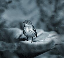 Tiny Bird on a Frosty Night by Bonnie T.  Barry