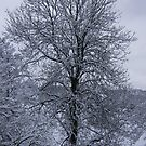Snow Tree by Louise Norman