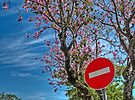 Last spring colours by awefaul