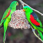 Red Wing Parrots by Geoff Beck