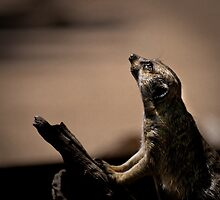 The Watchman by Craig Hender