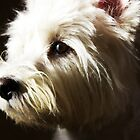 Westie face by Gemma  Simpson