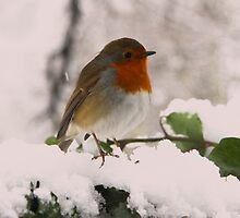 Twittering in the snow by Penny V-P