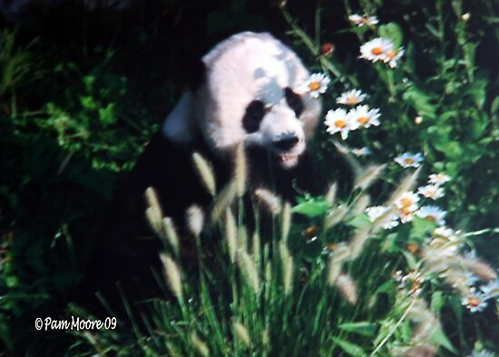 Panda Amongst the Daisies by Pam Moore