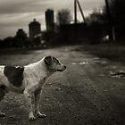 Alone by Igor Motl