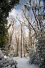 Snowy Dulwich Woods: South London. UK. by DonDavisUK