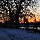 Tree Landscape by KChisnall