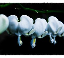 Bleeding Hearts by indeannajones