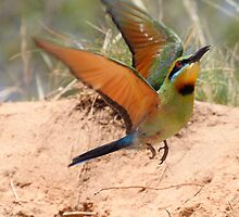 Bee-Eater Liftoff by Phillip Weyers
